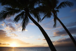 Sunset Sky Framed by Palm Trees Over the Pacific Ocean in Kihei Hawaii